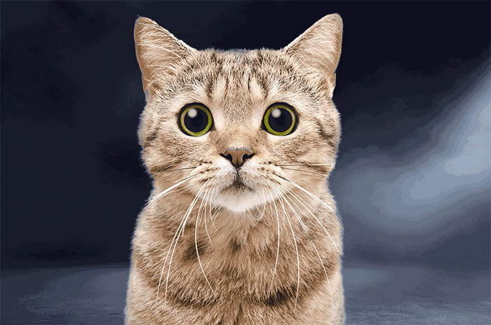 Animated Cat Pictures 12