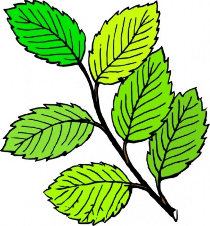 Animated Pictures Of Leaves