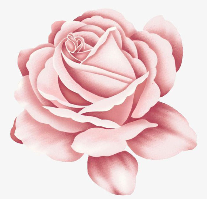 Animated Rose Flower Images