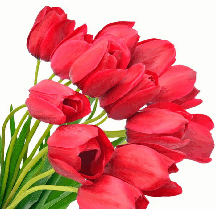 Animated Tulip Images