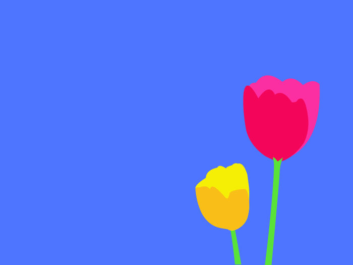 Animated Tulip Pictures