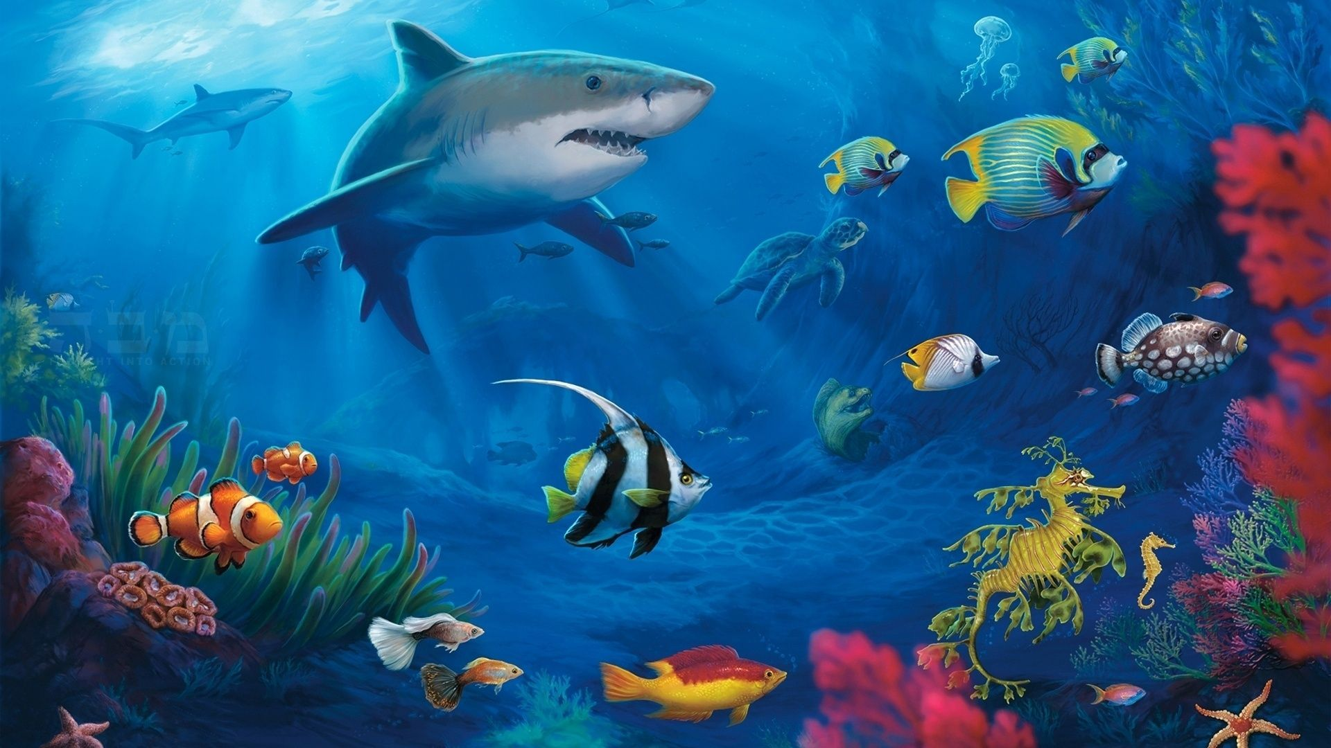Water Fish Images