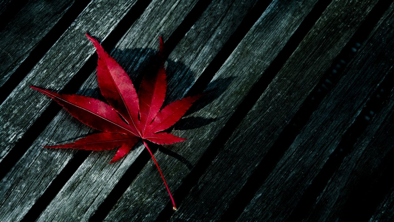 Abstract Autumn Leaves Hd Wallpapers