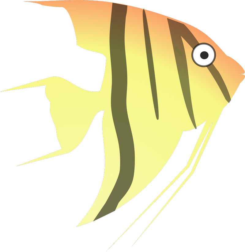 Angelfish Animated Pictures