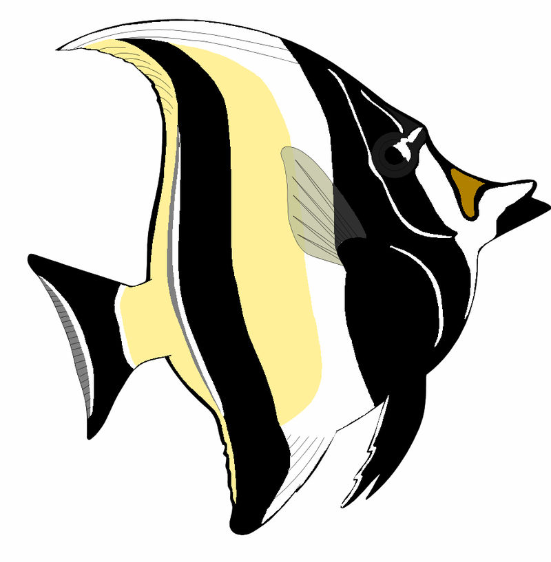 Animated Pictures Of Angelfish