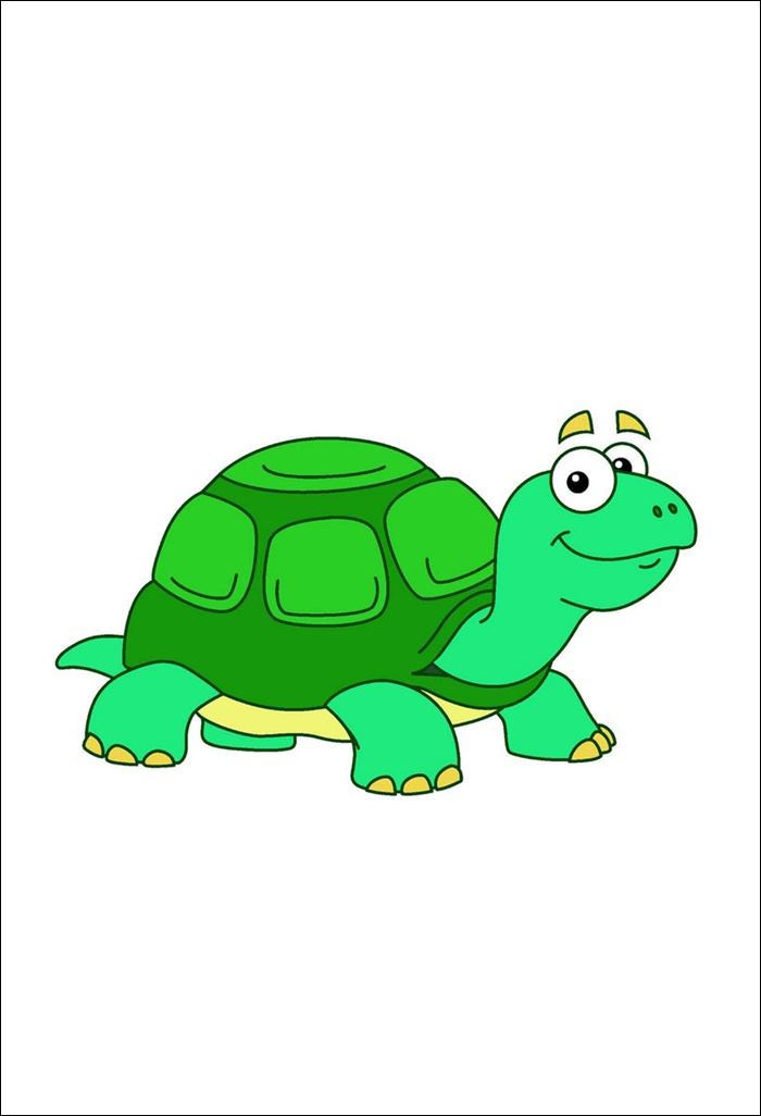 Animated Pictures Of Turtle