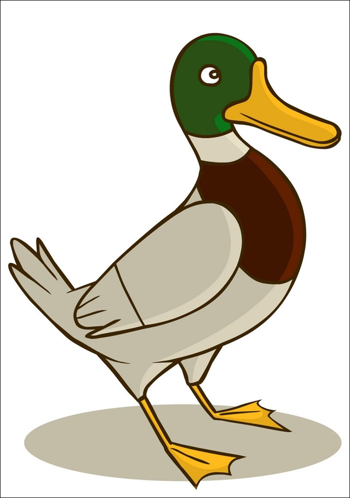 Duck Animated Pictures