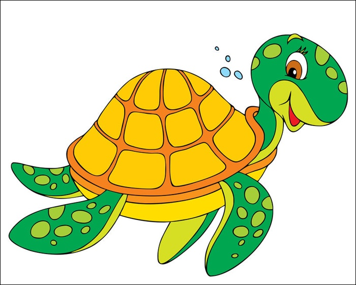 Turtle Animated Pictures