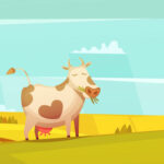 Cow HD Images