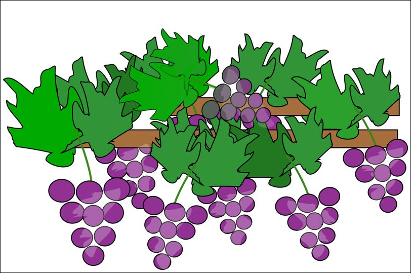 Grape Animated Pictures