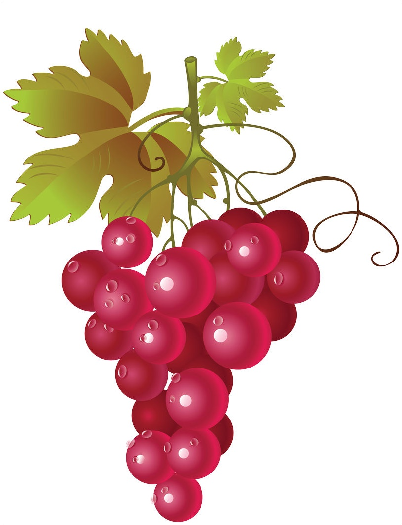 Grape Png Images