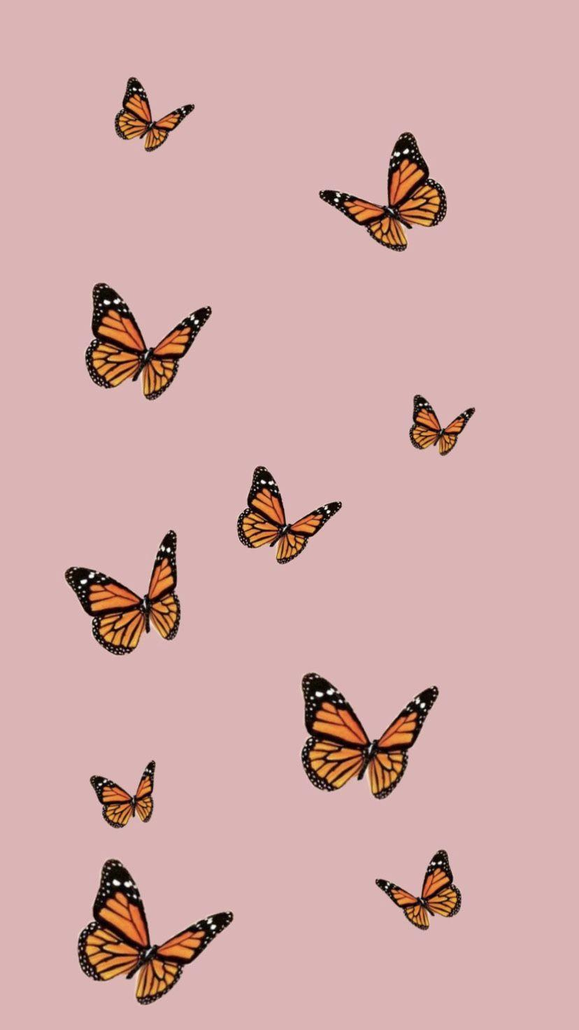 Aesthetic Butterfly Wallpapers