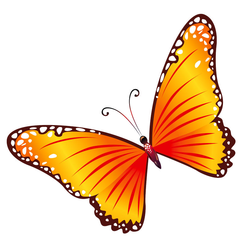 Animated Butterfly Pictures Free