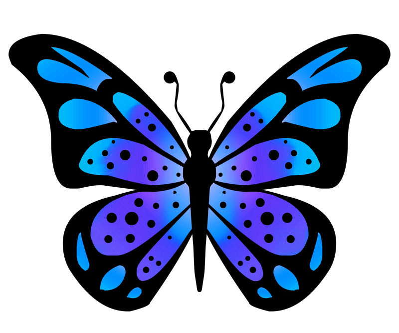 Butterfly Animated Pics