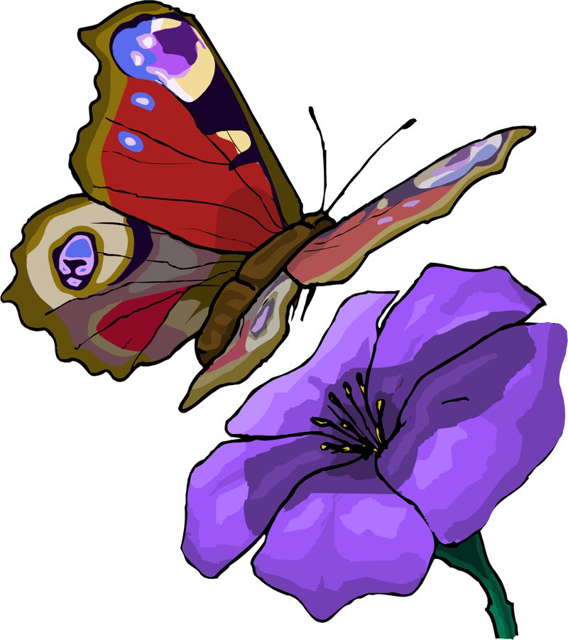 Butterfly Animated Pictures