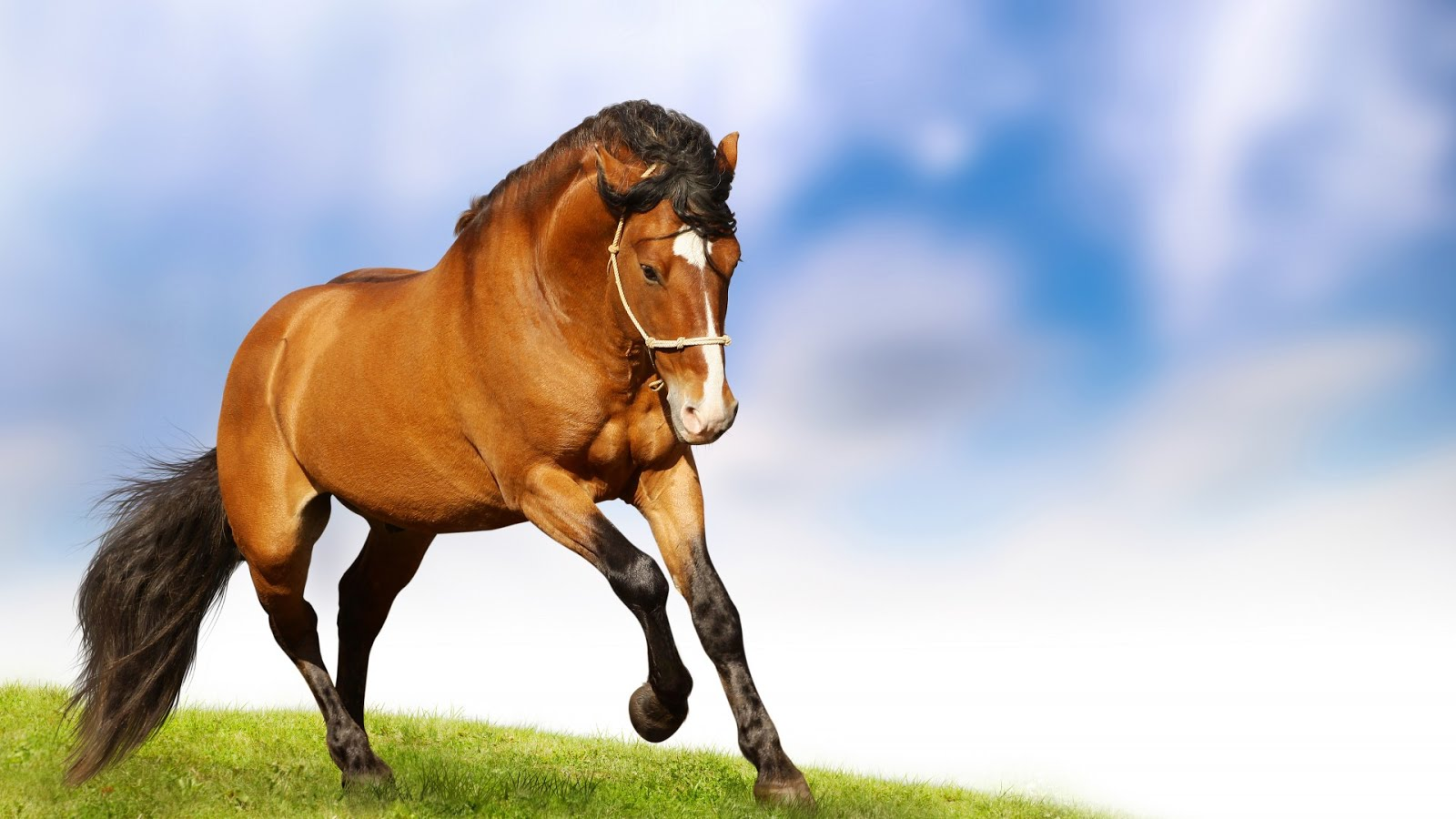 Best Horse Animated Images