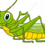 Funny Grasshopper Animated Pictures