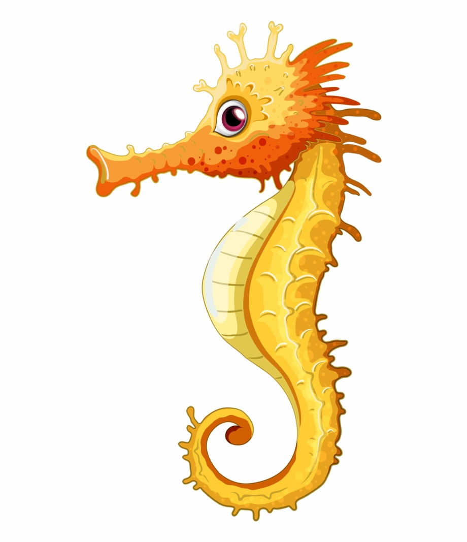 Seahorse Animation Images