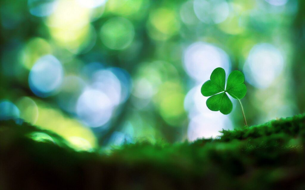 Cute Shamrock Pictures
