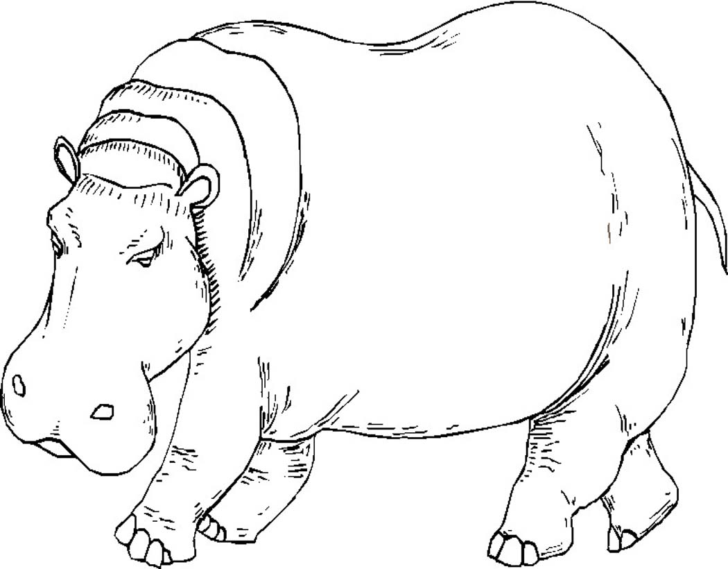 Adult Coloring Pages Hippo