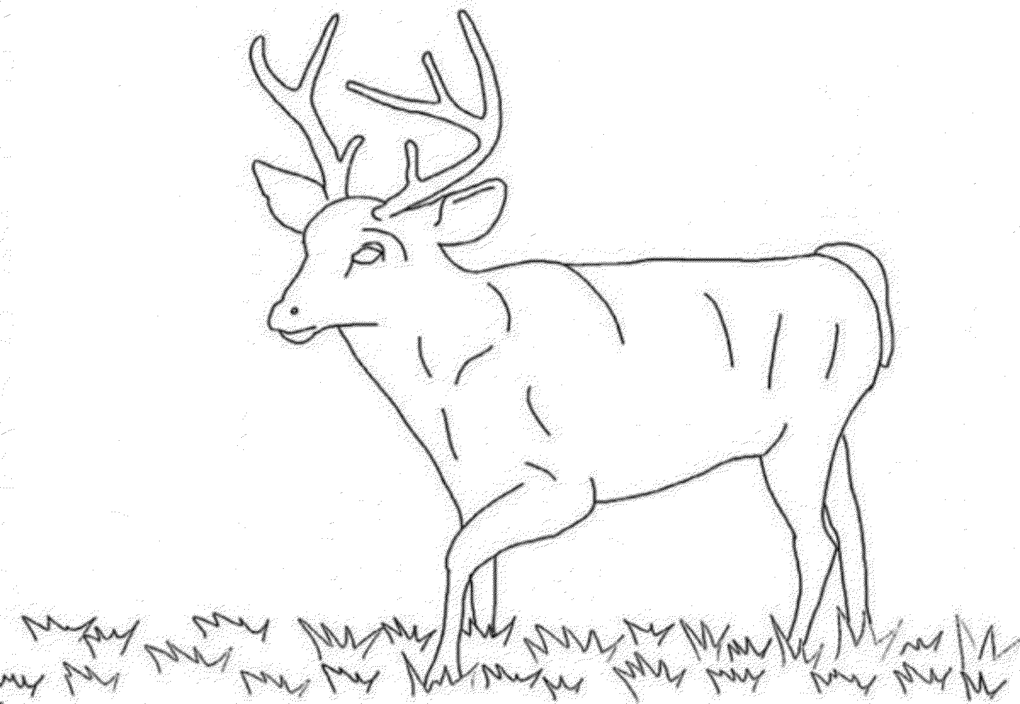 Deer Adult Coloring Pages