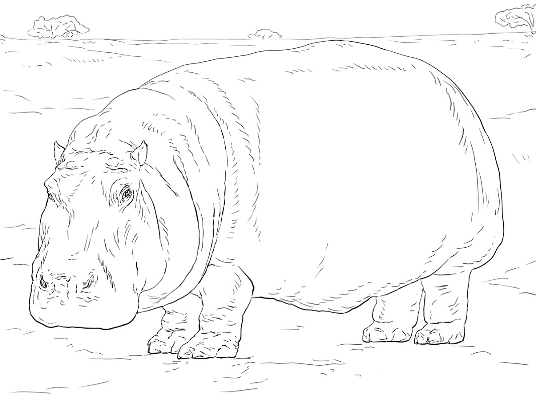 Hippo Coloring Pages For Adults