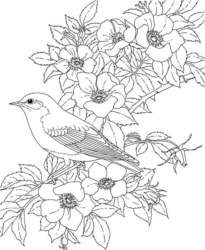 Adult Bird Coloring Pages