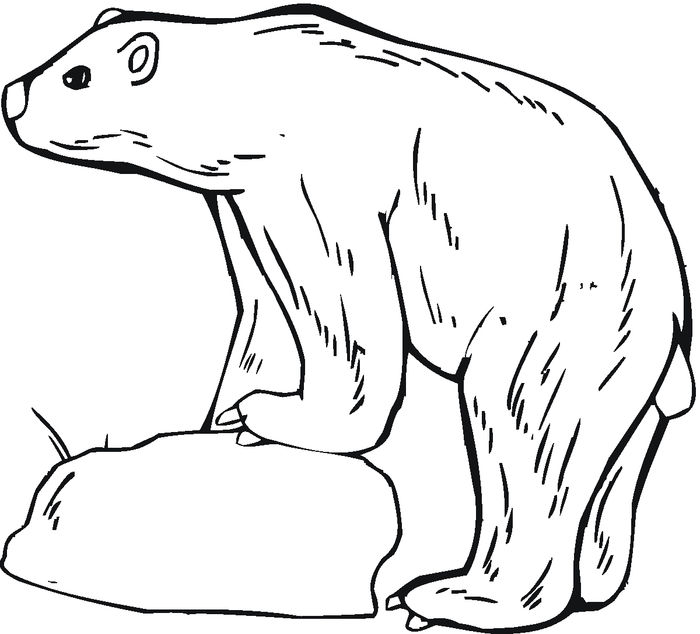 Adult Coloring Pages Bear