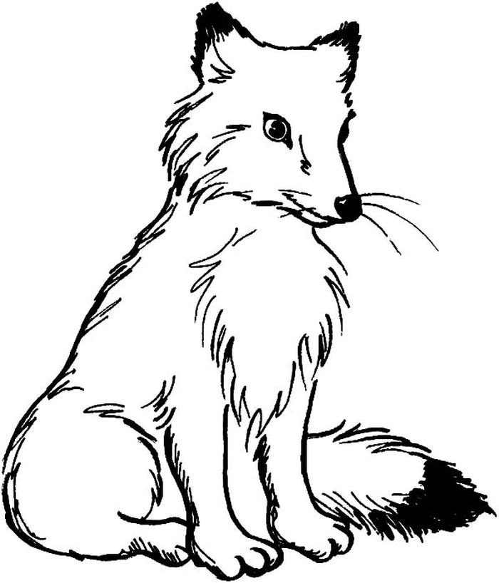 Adult Coloring Pages Fox