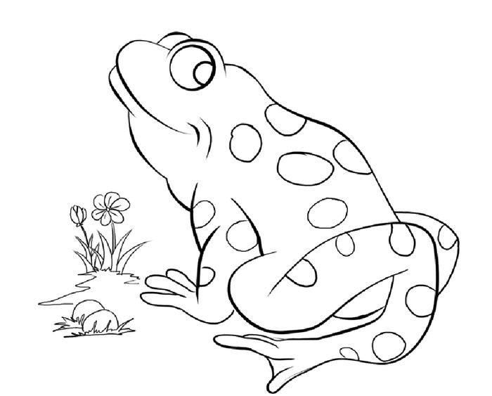 Adult Frog Coloring Pages