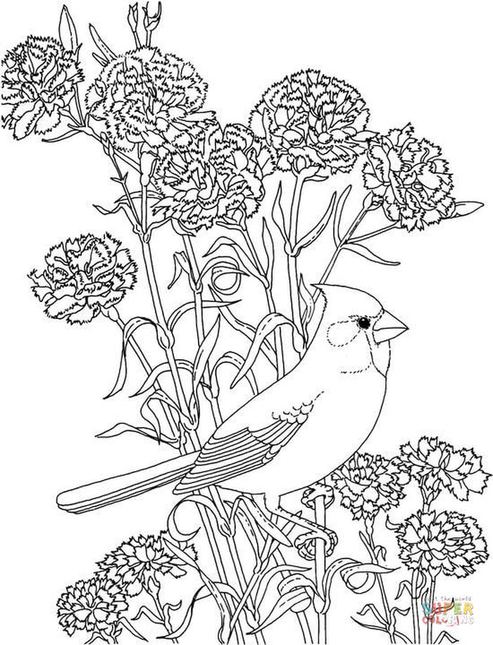 Bird Adult Coloring Pages