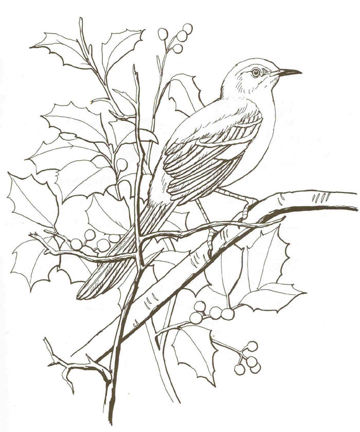 Bird Coloring Pages Adult