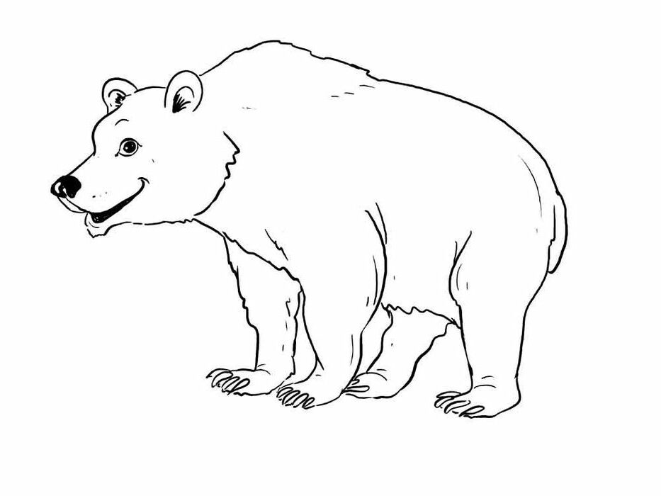 Black Bear Coloring Pages