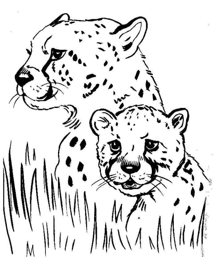 Cheetah Cubs Coloring Pages