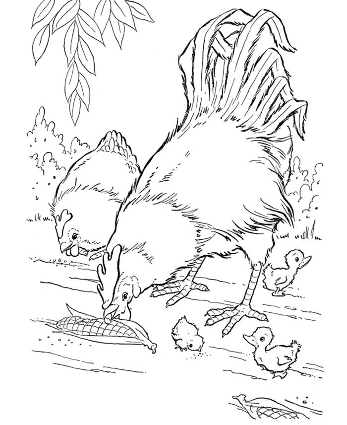 Chicken Coloring Pages Farm Animal