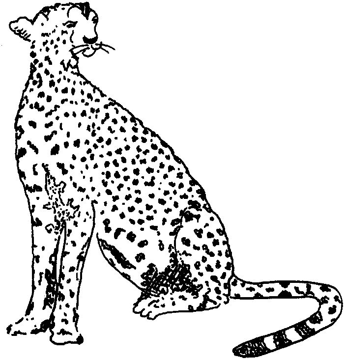 Coloring Book Pages Cheetah
