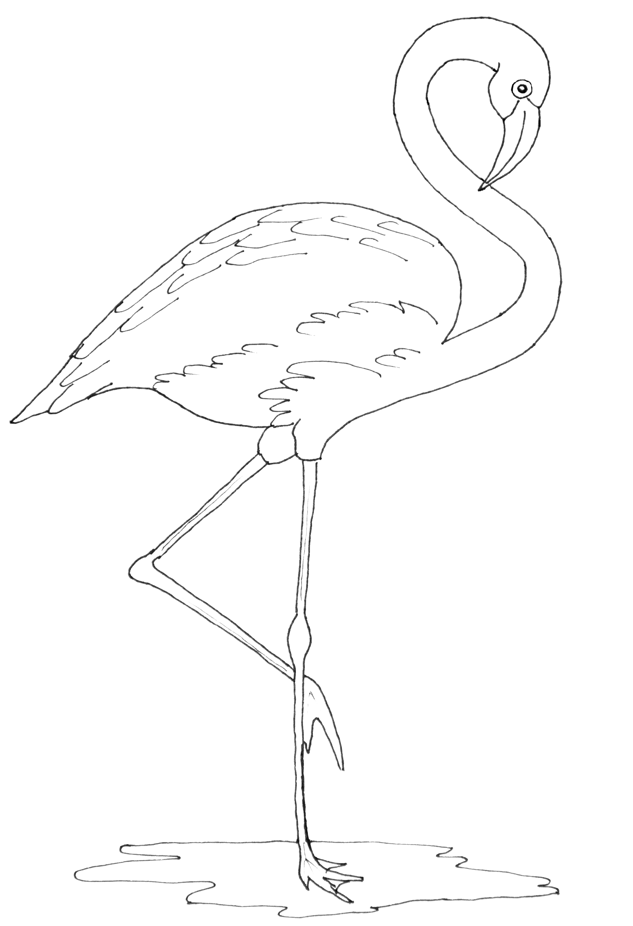 Coloring Pages Flamingo