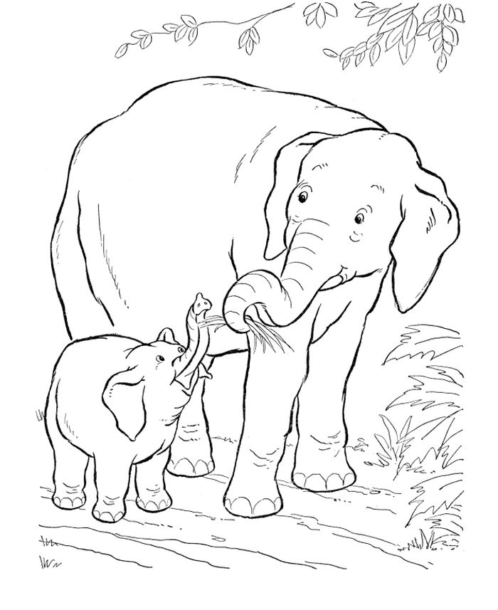 Coloring Pages For Adults Elephant