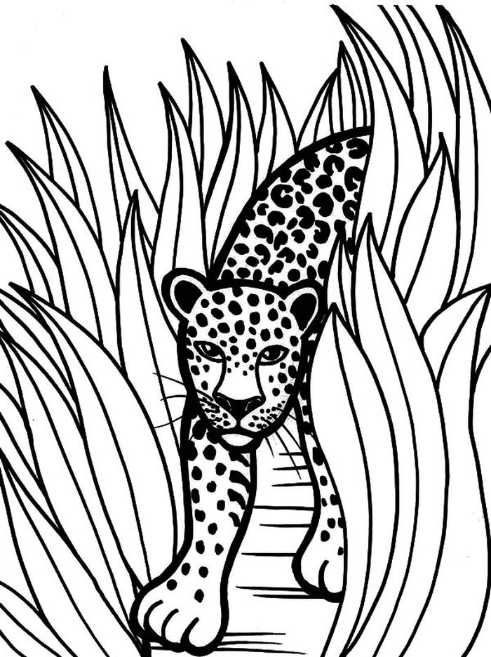 Coloring Pages For Cheetah