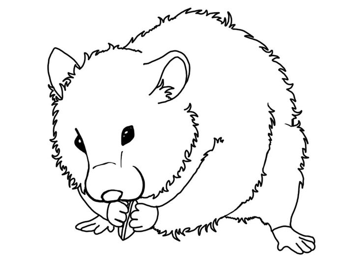 Coloring Pages H Hamster