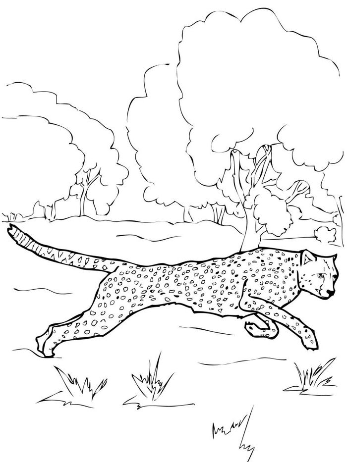 Cool Cheetah Coloring Pages