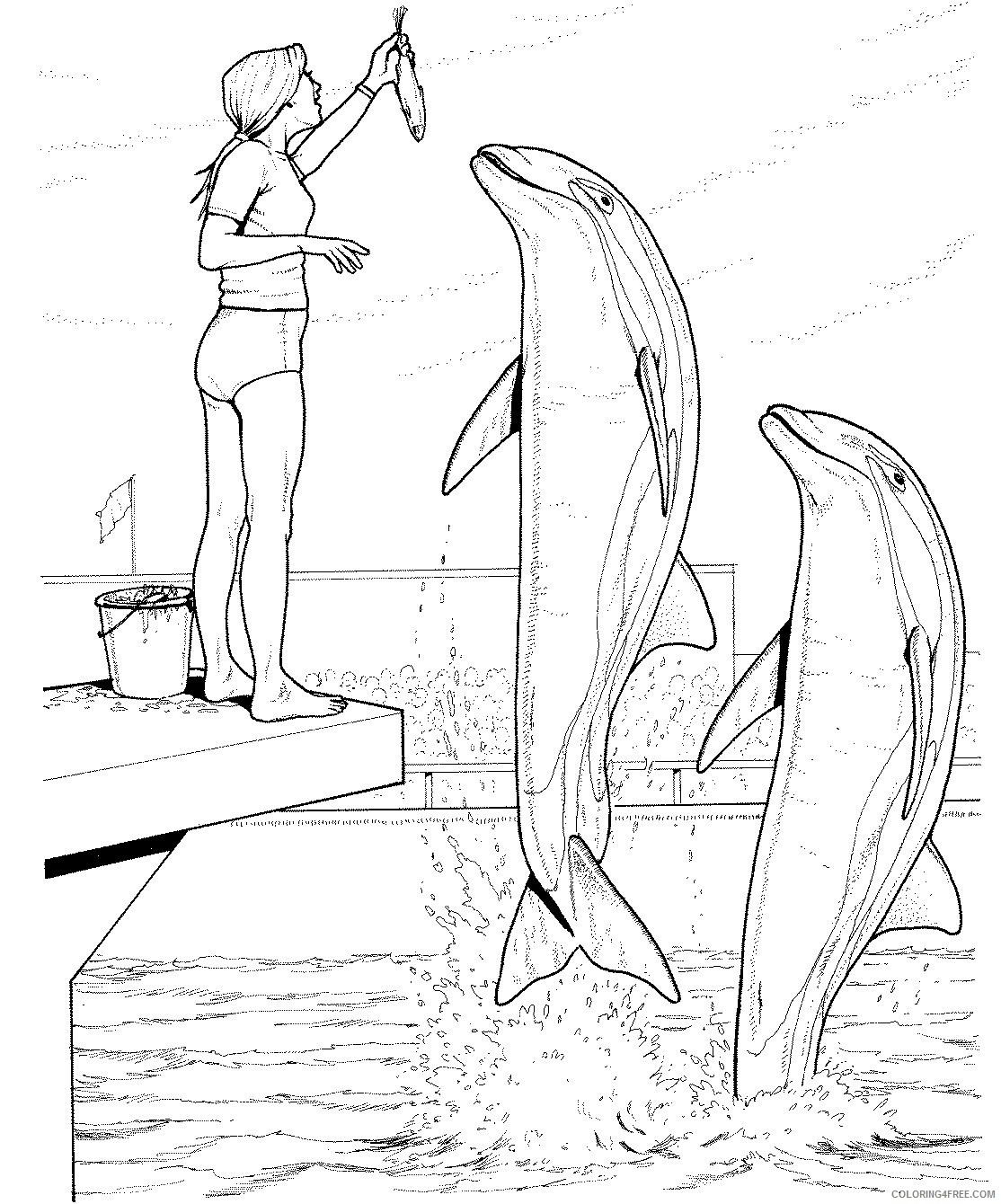 Dolphin Adult Coloring Pages