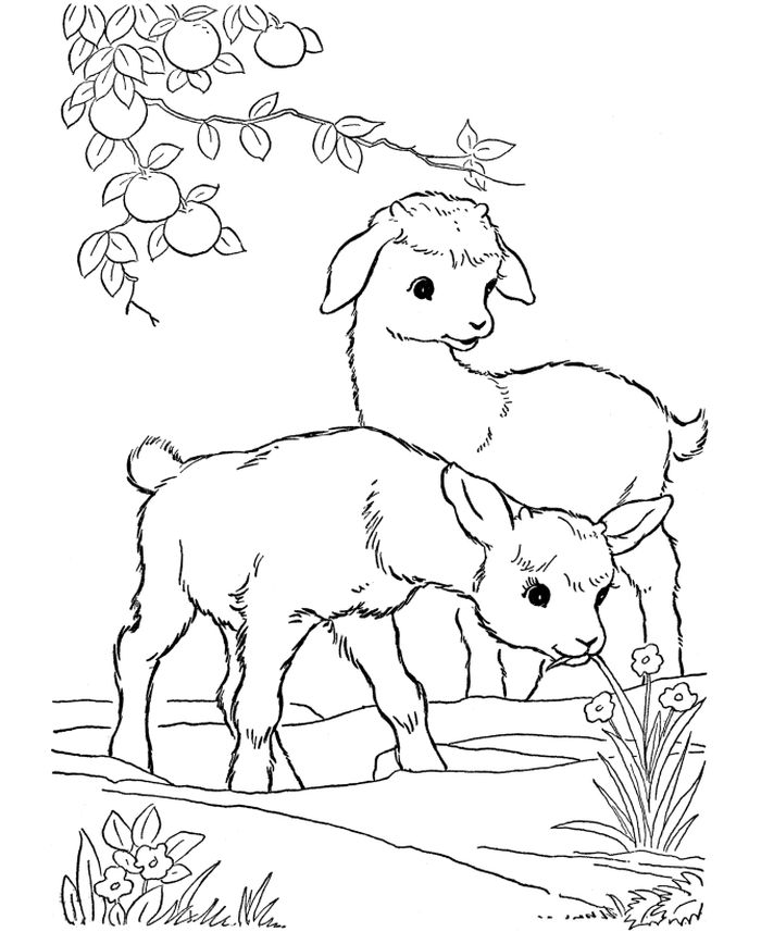 Farm Animal Coloring Pages Goat