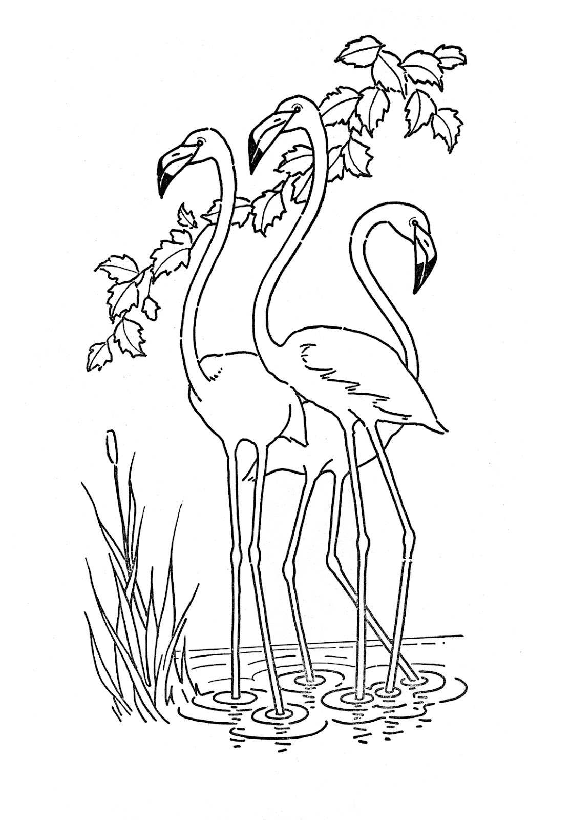 Flamingo Coloring Pages For Adults