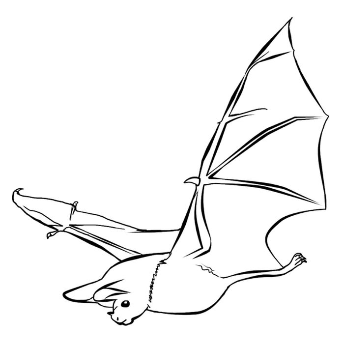 Flying Bat Coloring Pages For Adults