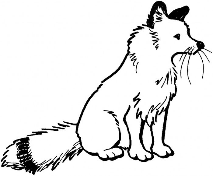 Fox Coloring Pages Free Printable