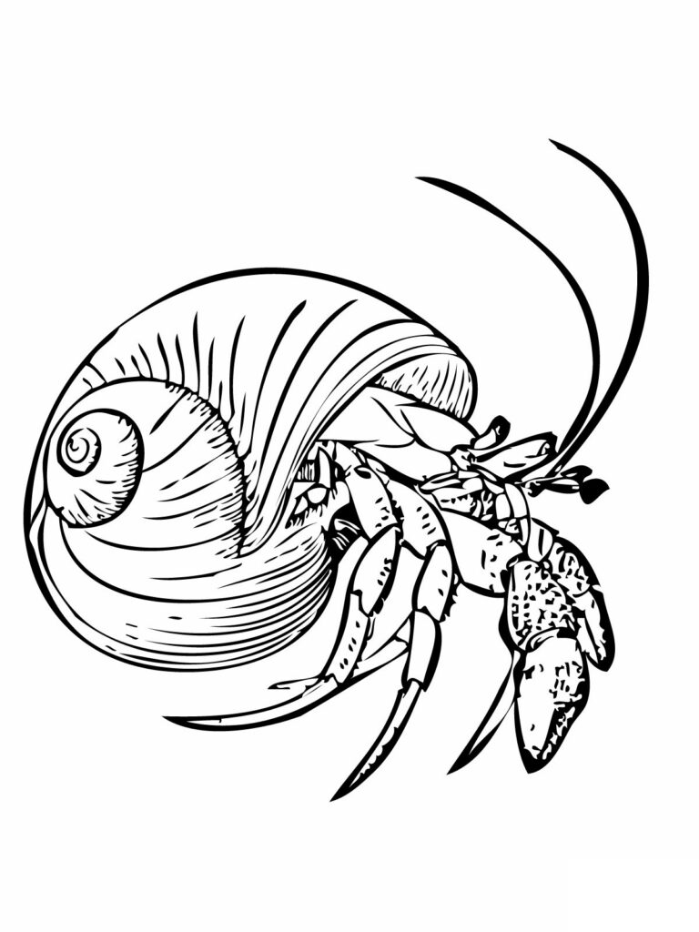 Free Hermit Crab Coloring Pages