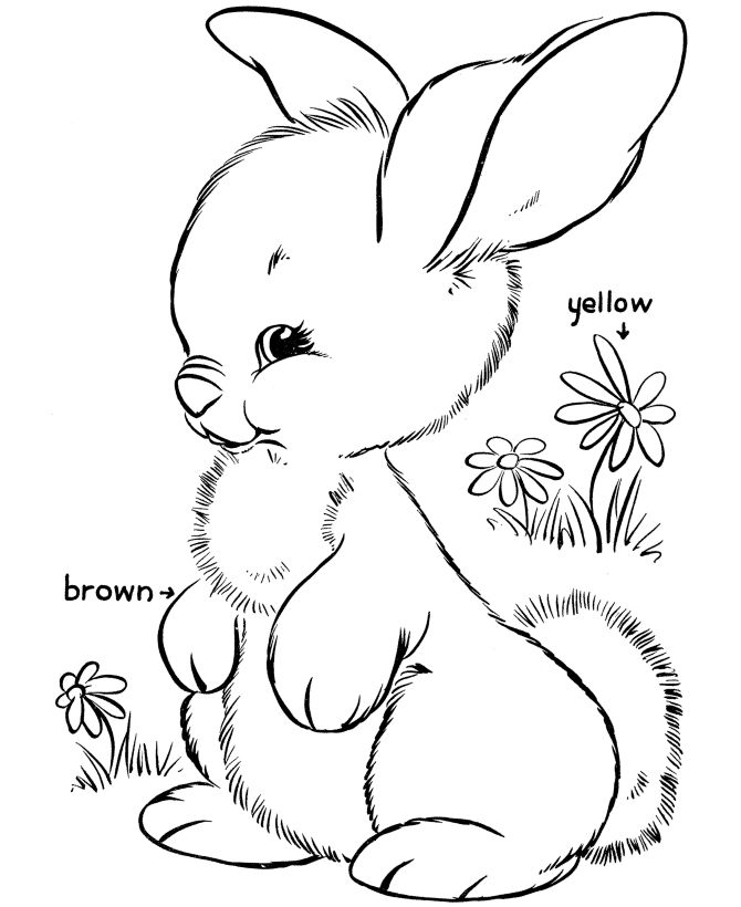 Funny Bunny Coloring Pages
