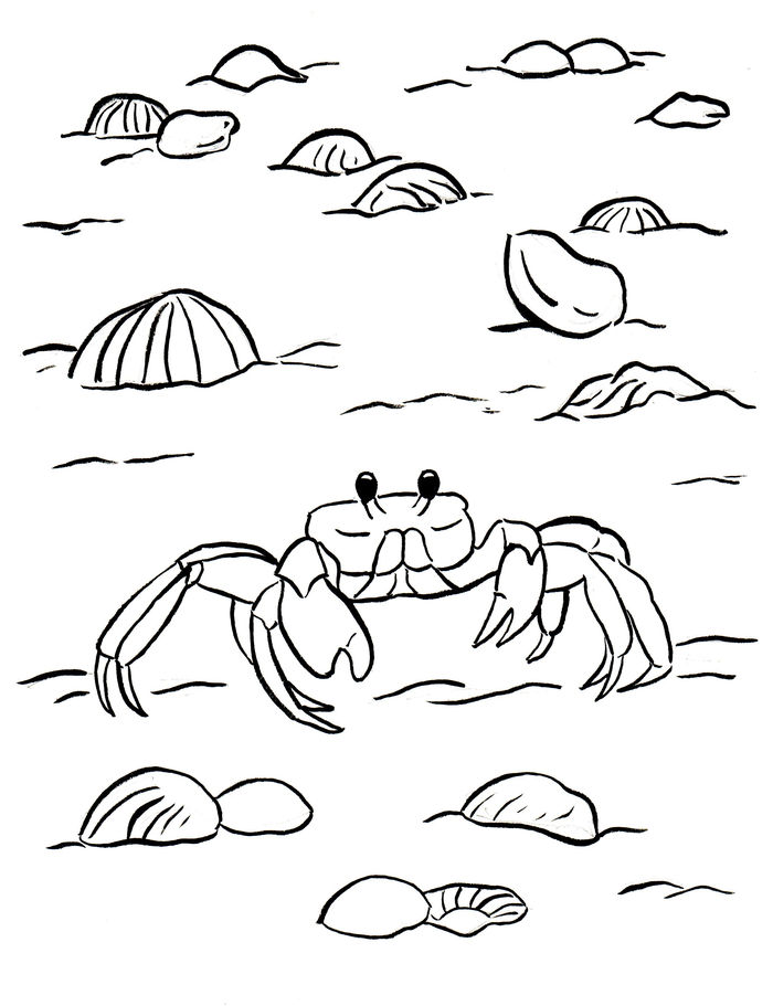 Ghost Crab Coloring Pages