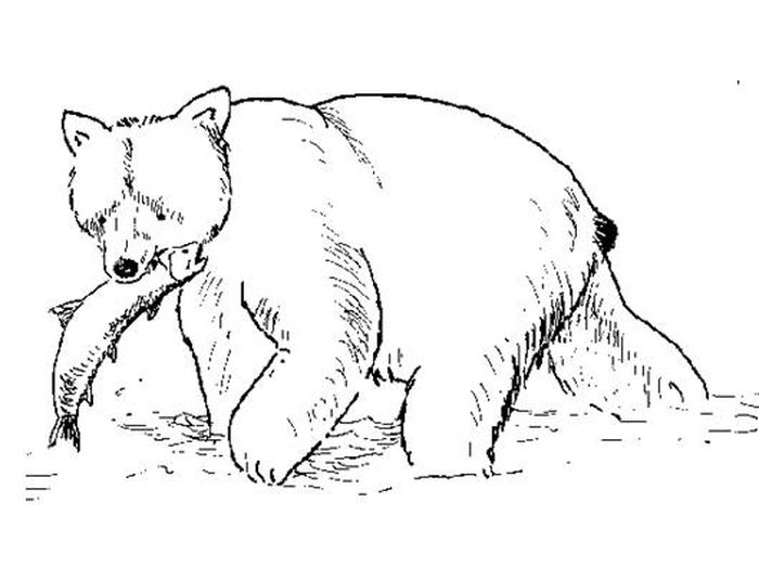Polar Bear Coloring Pages